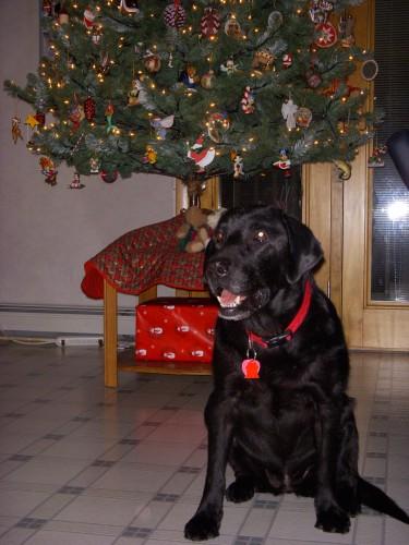 christmas-sophie-2008-111
