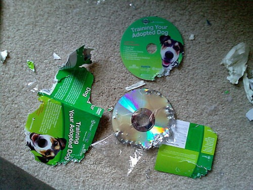 dog-training-dvd-destroyed
