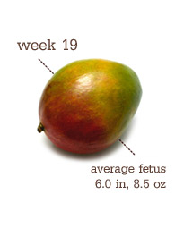Week 19 - Mango