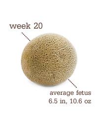 Week 20 - Cantaloupe
