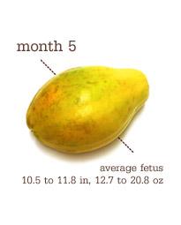 Week 22-24 - Month 5 - Papaya