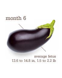 Week 25-28 - Month 6 - Eggplant