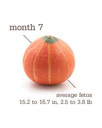 Week 29-32 - Month 7 - Squash