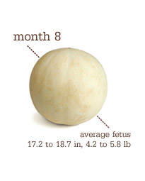 Week 33-36 - Month 8 - Honeydew