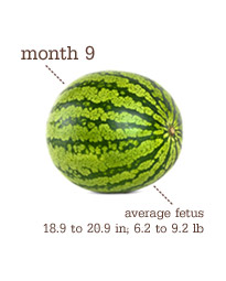 Week 37-Delivery - Month 9 - Watermelon
